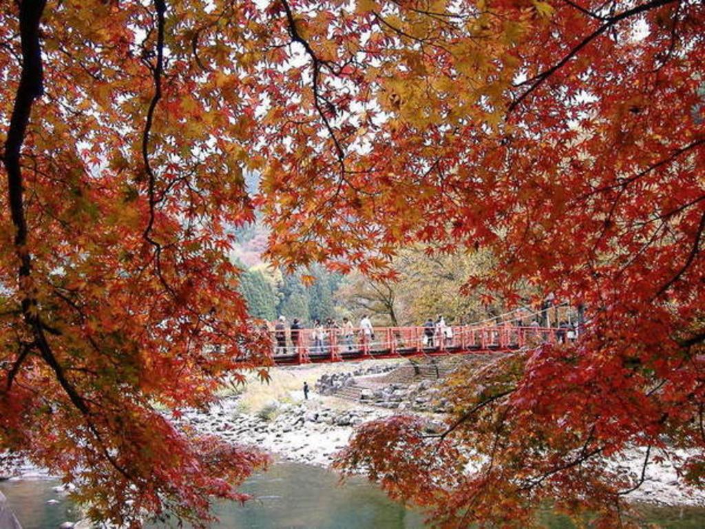 香嵐渓のモミジ