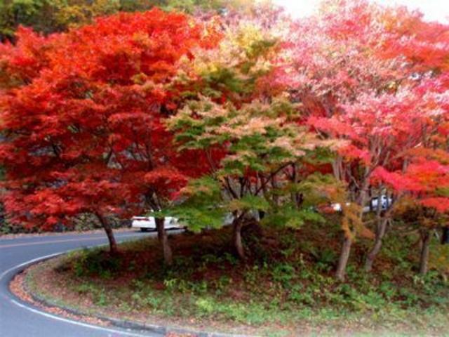 日塩もみじラインの新緑と紅葉