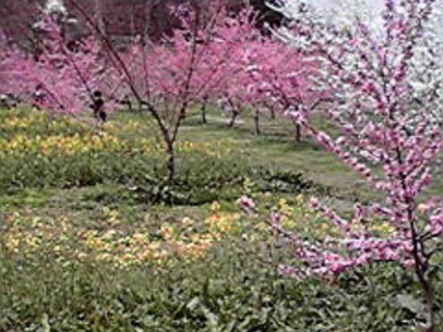 飯坂温泉花ももの里