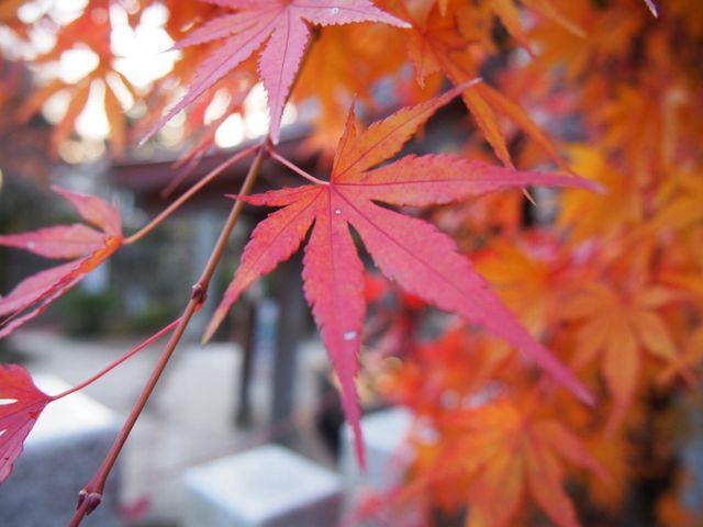 残り少ない紅葉_筑波山