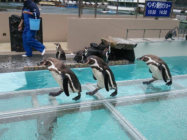 ペンギン_下田海中水族館