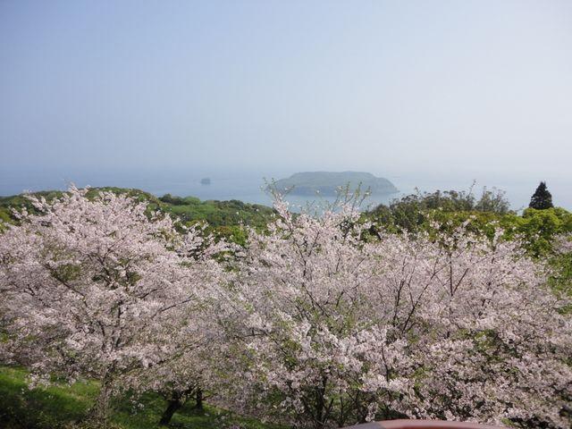 桜と知林ヶ島_魚見岳自然公園