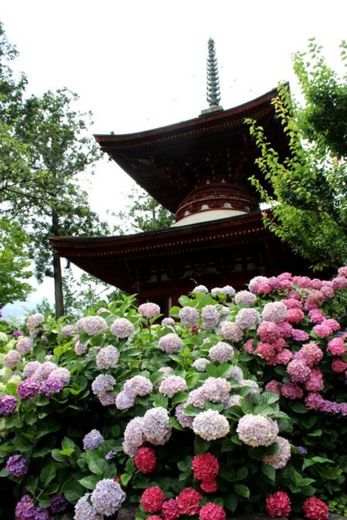 久米寺のあじさい
