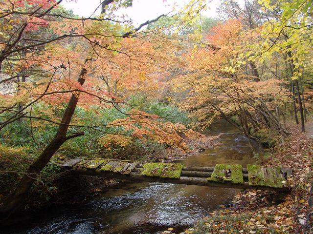 紅葉の滝川1_滝川渓谷