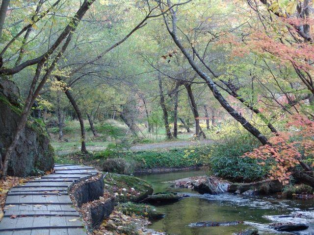 紅葉の滝川2_滝川渓谷