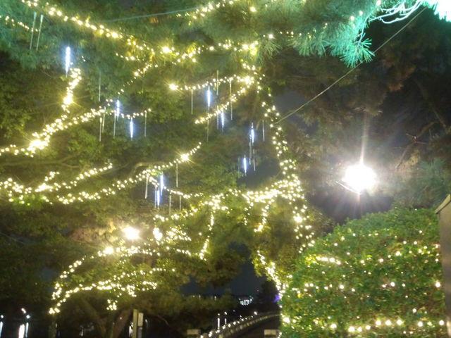 クリスマスのイルミネーション _大濠公園