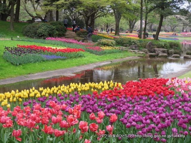 花が綺麗_国営昭和記念公園