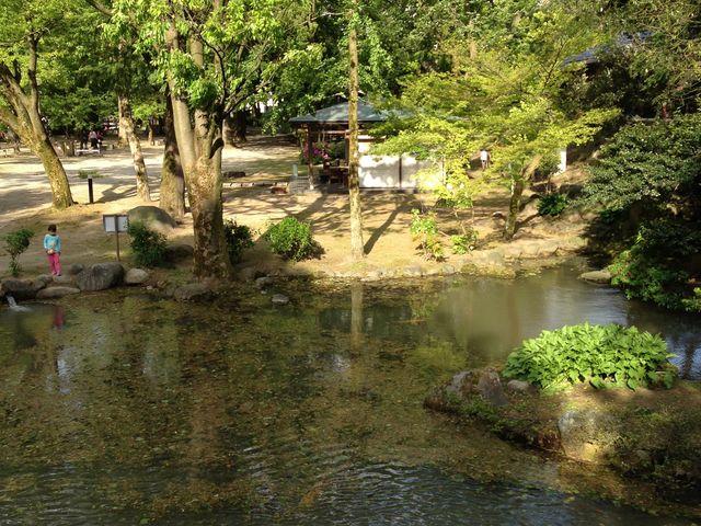 庭も綺麗でした_富山城址公園