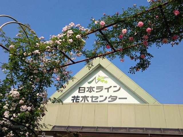 バラ満開_日本ライン花木センター