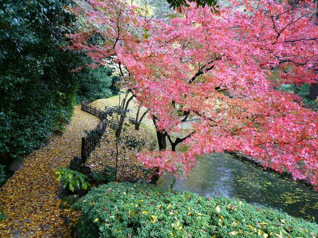 紅葉が綺麗_栗林公園