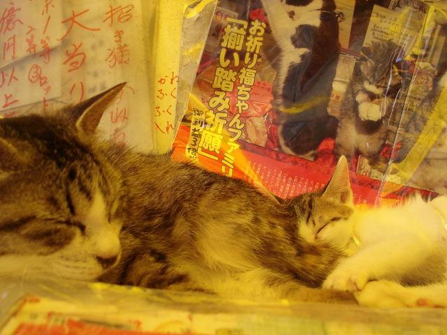 なでなでするとご利益のある、にゃんこ親子。商品の上で寝ております。_宝当神社