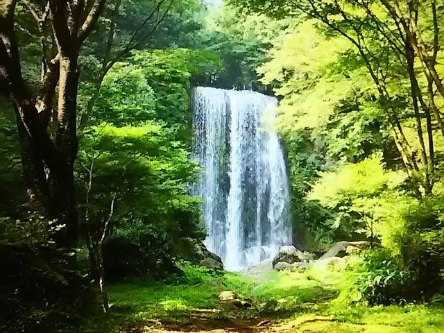 ゆうすい自然の森(旧:遊水峡キ...