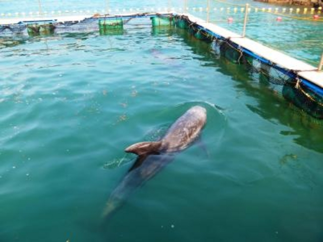 夏の期間限定で、クジラを間近に見ることができる_くじら浜海水浴場