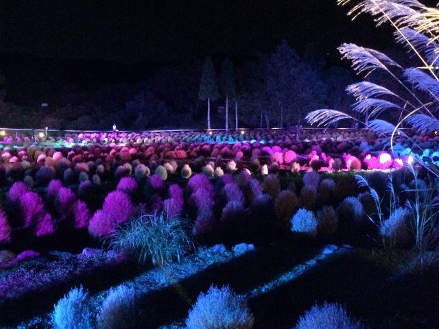 ライトアップの他、アコースティックライブがありました。_国営みちのく杜の湖畔公園