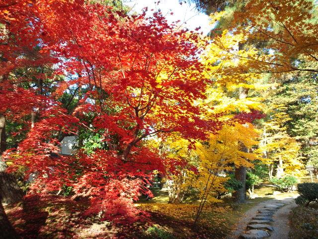 赤や黄色、紅葉が鮮やか!_清水園