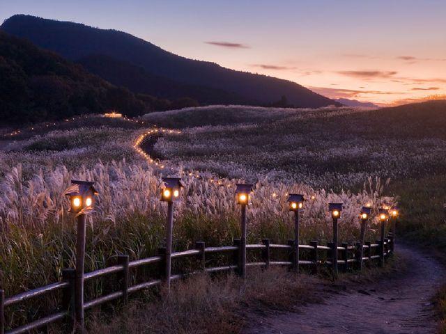 灯篭にライトが灯ります_曽爾高原