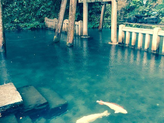 この池を観るためだけに訪れてもムダにならない位に癒されます。_鹿島神宮