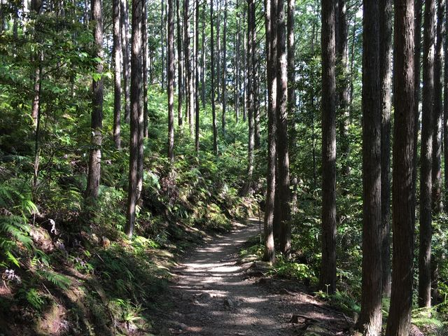 熊野古道 木漏れ日が気持ち良かったです。_熊野古道