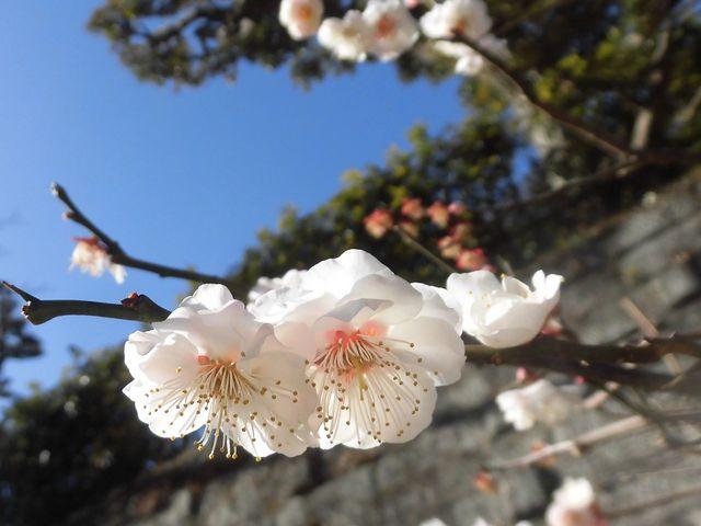 ②_円覚寺