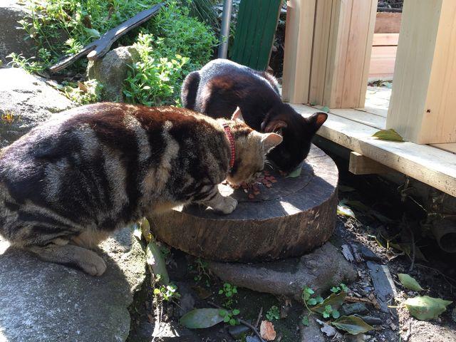 餌を食べてるネコたち_千光寺公園