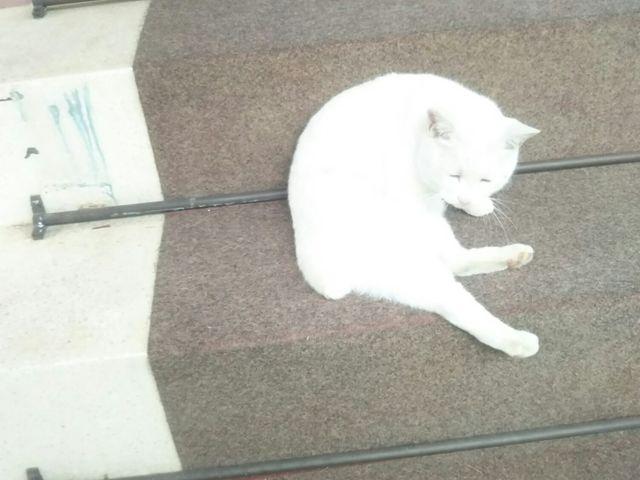 こちらは本物の猫_今戸神社