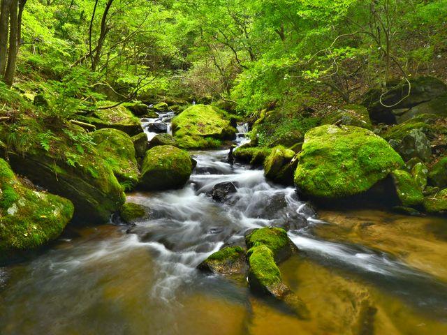 苔むした岩と流れ_滝川渓谷