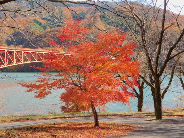 真っ赤に色づいた葉が綺麗でした。_草木湖