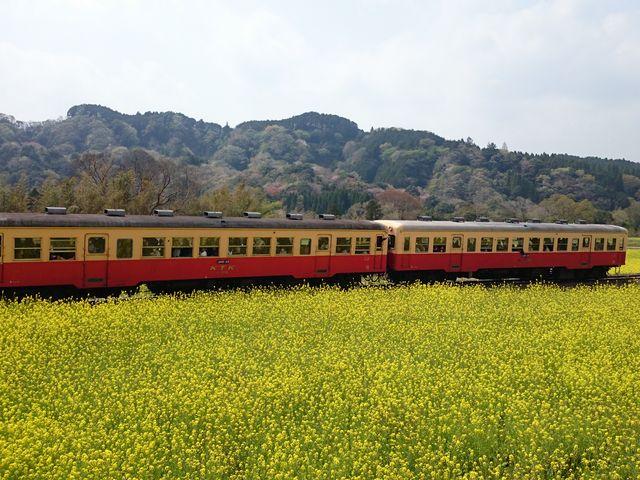 菜の花畑の電車。_いすみ鉄道
