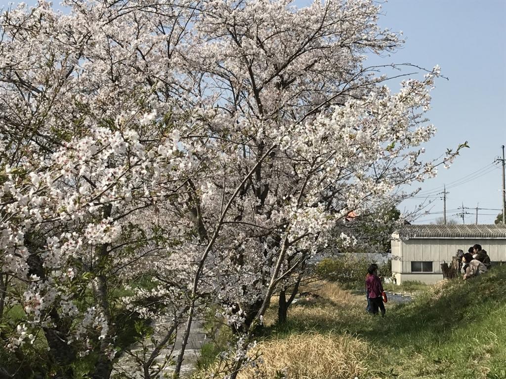 虚空蔵谷川畔桜並木