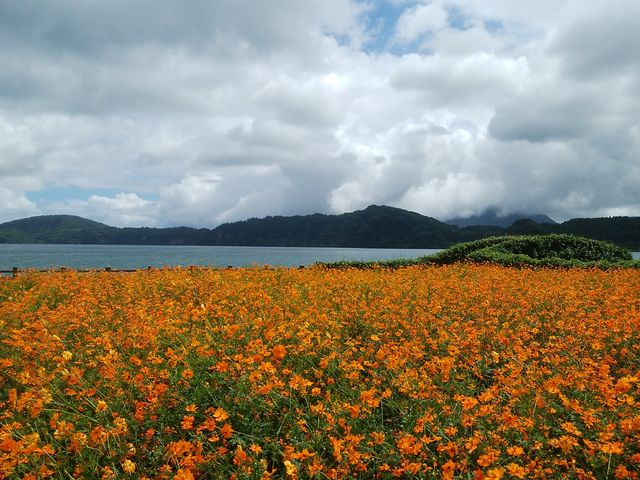 四季それぞれの花が咲いています_池田湖