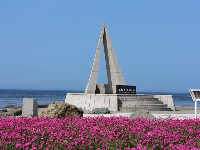 アルメリアの花_宗谷岬
