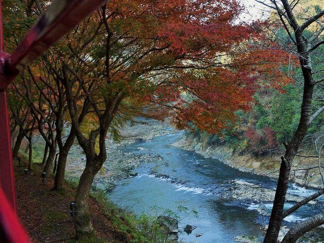 秋のトロッコ列車_嵯峨野トロッコ列車
