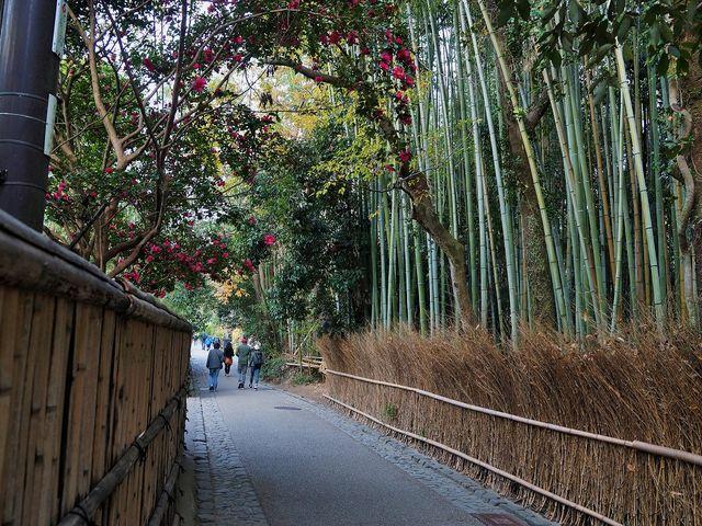 竹林の道_竹林の道