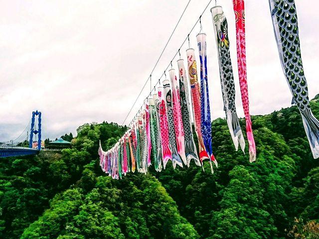 見事な鯉のぼり_竜神大吊橋