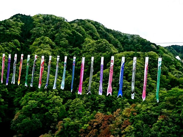 見事な鯉のぼり4_竜神大吊橋