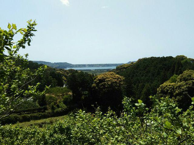 梅のトンネル頂上から浜名湖_長楽寺