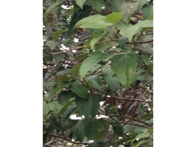 木々_諏訪神社
