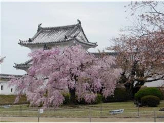 満開桜と櫓、ここから化粧櫓へ。 _姫路城化粧櫓