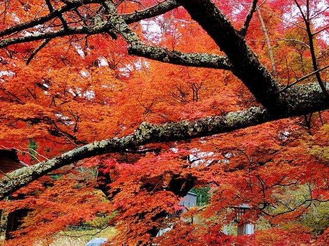 土津神社にて、見事な紅葉です_土津神社