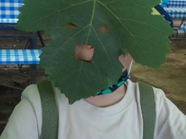 ぶどうの葉っぱで作ってもらったお面。3歳児の顔にぴったり。_金原園