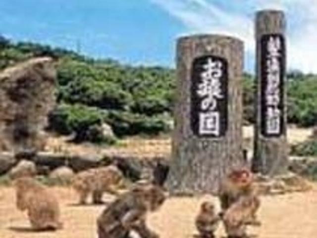 500匹余りの猿が仲よく暮らすお猿の国_小豆島銚子渓自然動物園 お猿の国