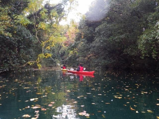 秋、フジの葉が黄色く色づきました。水面に浮かぶ落ち葉が、秋の哀愁を誘います。_カヌーリゾートたまよど