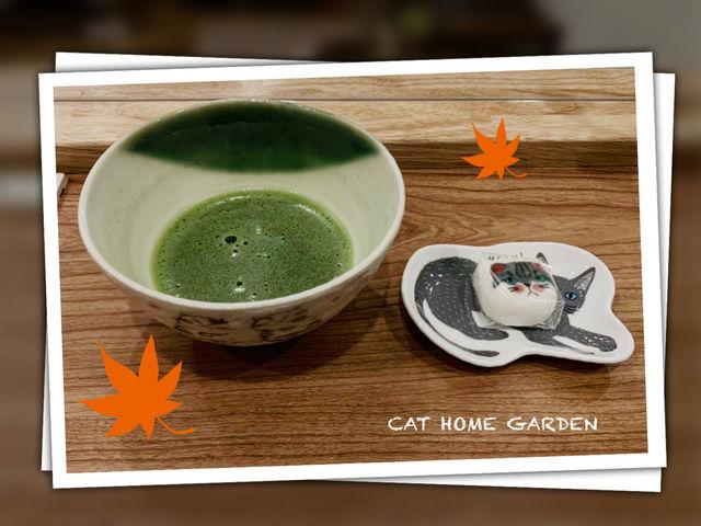 譲渡型保護猫カフェ CAT HOME GARDEN