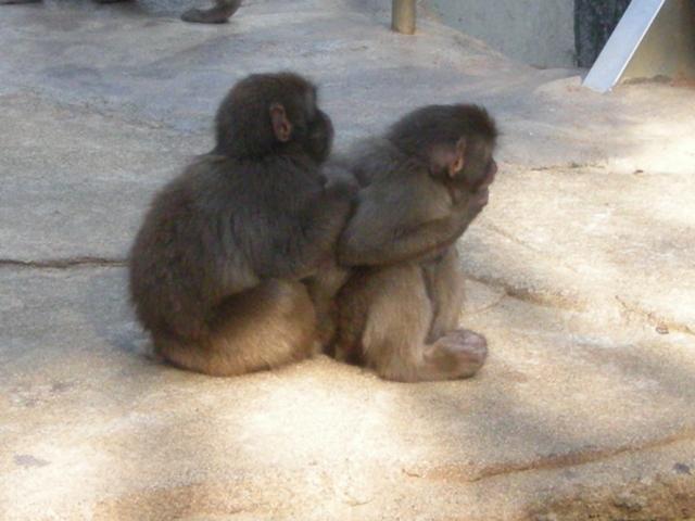 浜松市動物園