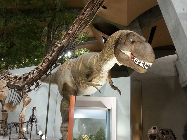 自然史博物館のティラノサウルス_群馬県立自然史博物館