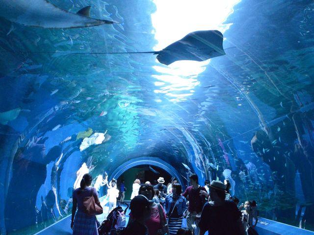 このトンネルが本当にすごいんです。。。何周もしたくなるほど見応え抜群です!_マクセル アクアパーク品川