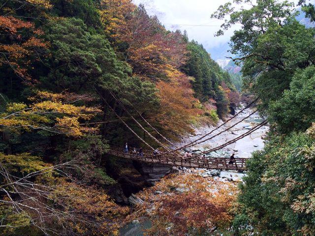 景観にとけこむ美しい橋_祖谷のかずら橋