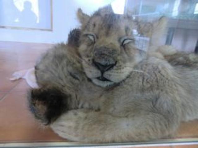 時期が良いと色んな動物の赤ちゃんに会えます!_九州自然動物公園アフリカンサファリ