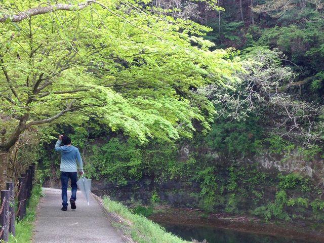 桜の季節はかなりオススメ!_養老渓谷