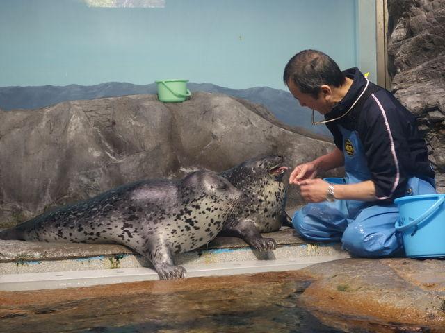 ずっと見ていたい、餌付け姿。_浅虫水族館